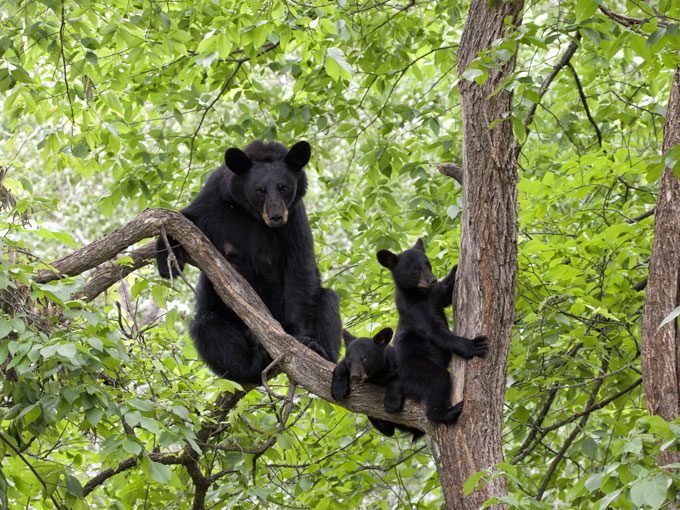 Few Animals that Can Actually Climb Trees