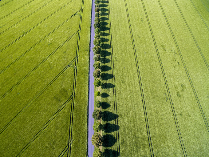 Field Cologne / Photo: dronepicr