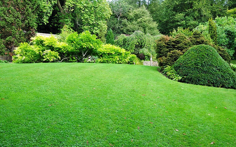 Large areas of green grass look beautiful - no doubts about it. Nevertheless, in order to keep your grass green during drought has its cost. Sprinkling water on daily bases is a done thing and consumes high quantities of water.