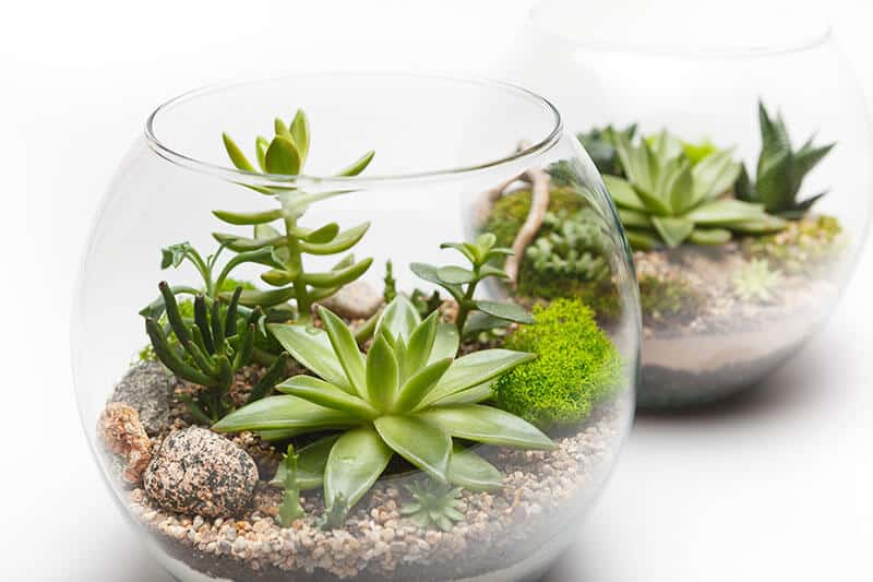 Another succulent mini garden in glass