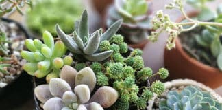 Easy To Grow Succulents