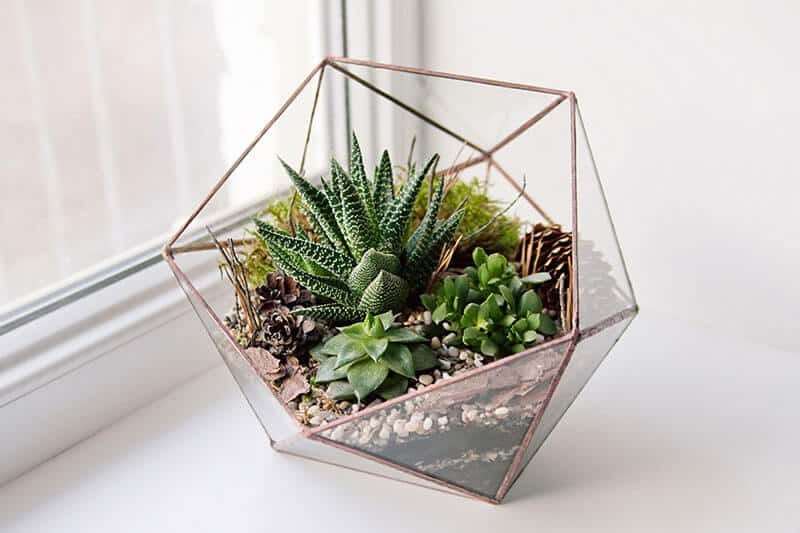 Succulents used in a mini garden in glass