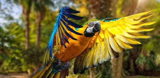The Most Alluring Animals