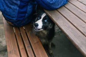 A homeless dog: Ordinary Individuals Making Extraordinary Differences