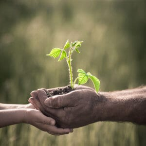 Child and old man holding green plant in hands