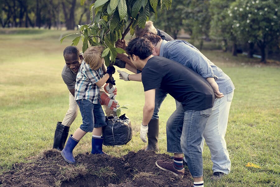 Planting Tree Together