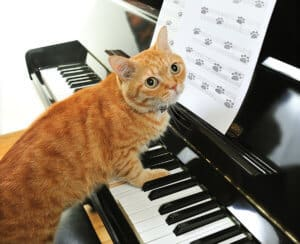 Purrrfectly designed music for pets