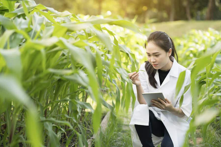 An engineer examining plant leaf for disease