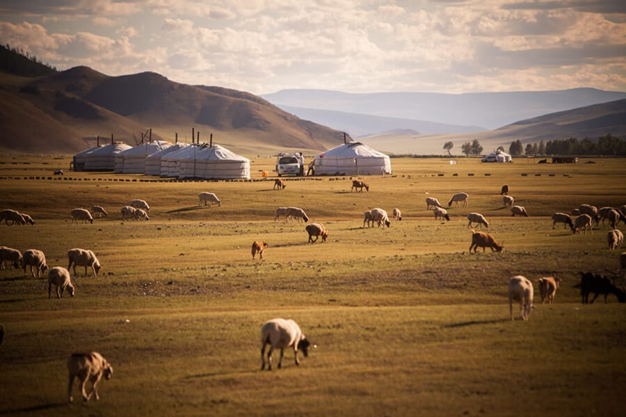 Mongolian yurts on a field