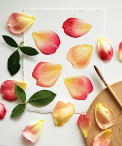 Painet versus real petals of roses